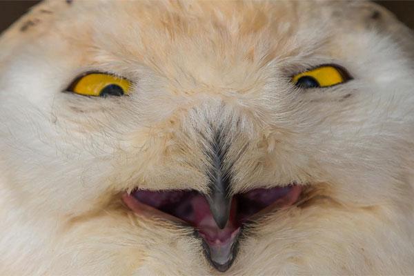 11 Самые смешные зверушки на планете