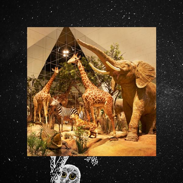 005 small8 Ночь музеев – 2015: лучшие события