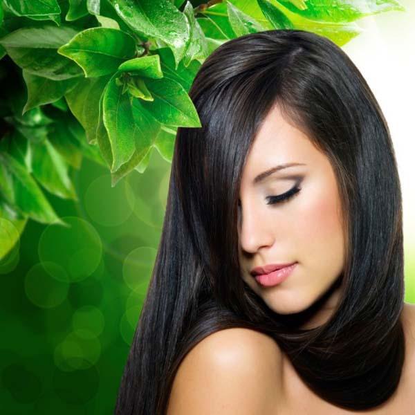2pcs font b Hair b font care PURE Olive font b Oil b font for Repairs Оливковое масло: полезные свойства, применение. Лучшие маски с оливковым маслом
