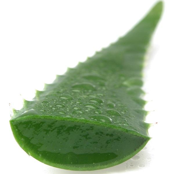 aloe vera plant Маски с алоэ для лица