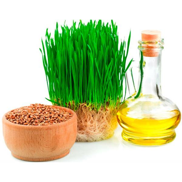 maslo zarodpshen lic 5 Масло зародышей пшеницы для волос
