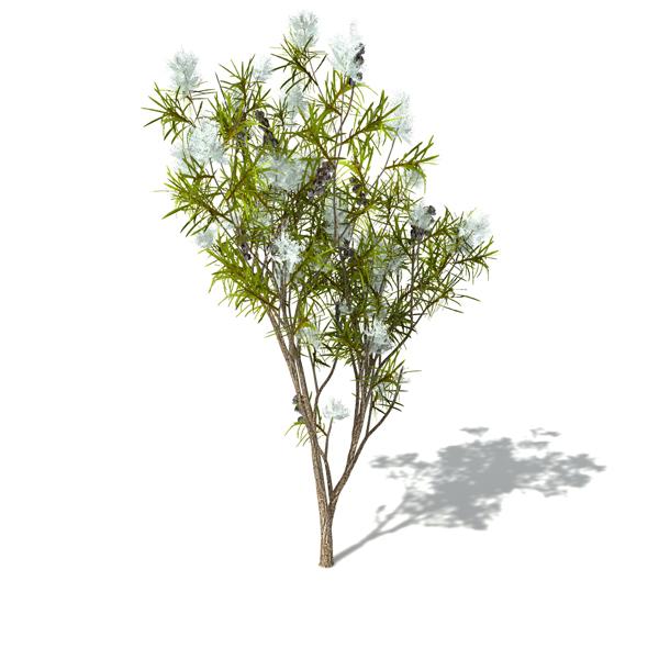tea tree1 Масло чайного дерева для волос. Рецепты масок