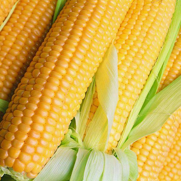 313 Кукурузное масло: полезные свойства и применение в косметологии