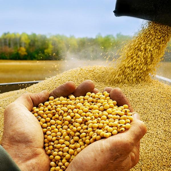 56 1hands soybean w Соевое масло: польза и применение в косметологии