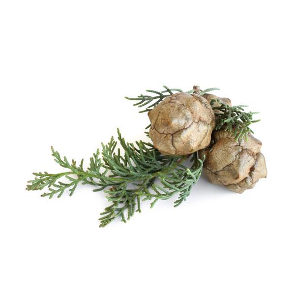 cypress french essential oil grande Эфирное масло кипариса: полезные свойства и применение в косметологии