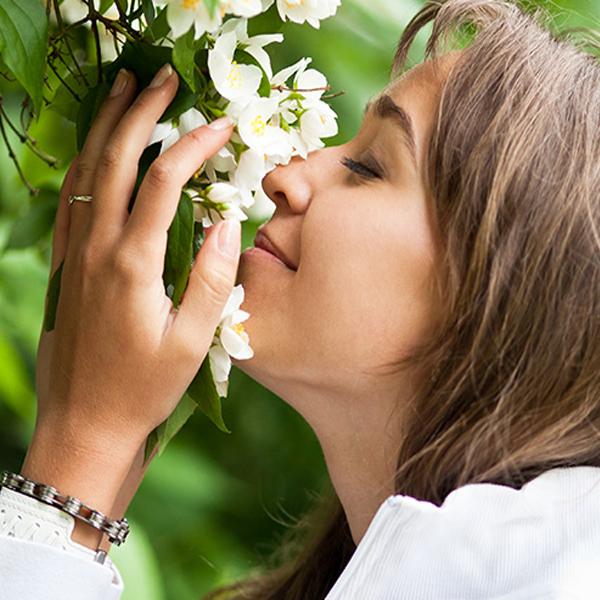 maslo jasmina2 Масло жасмина: полезные свойства, применение в косметологии и медицине