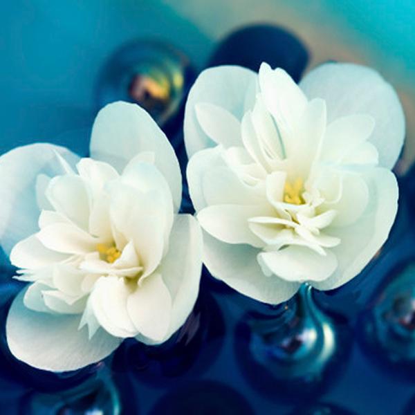 maslo jasmina3 Масло жасмина: полезные свойства, применение в косметологии и медицине