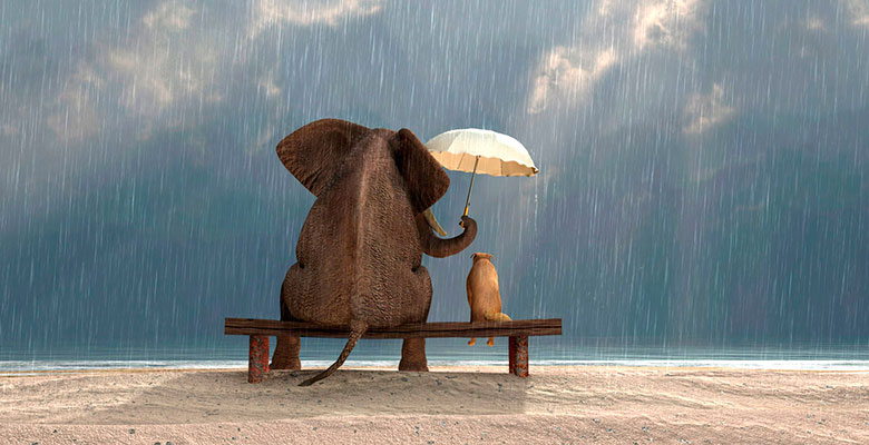 https://sunmag.me/wp-content/uploads/2016/05/elephant-dog-kindness.jpg