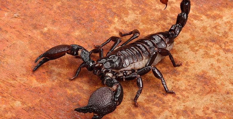 Скорпион знак зодиака мужчина как его понять