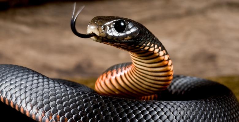 Что символизирует змея: значение в изображениях, украшениях